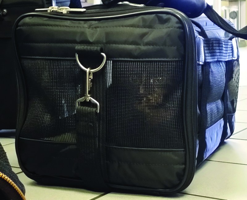 tortie cat in carrier