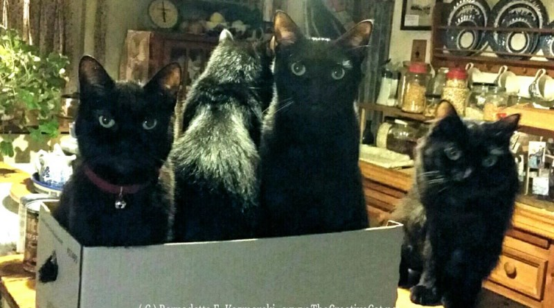 Organizing your cats.