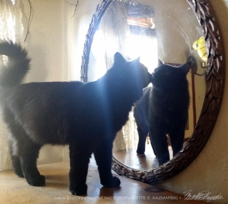kitten looking at himself in a mirror