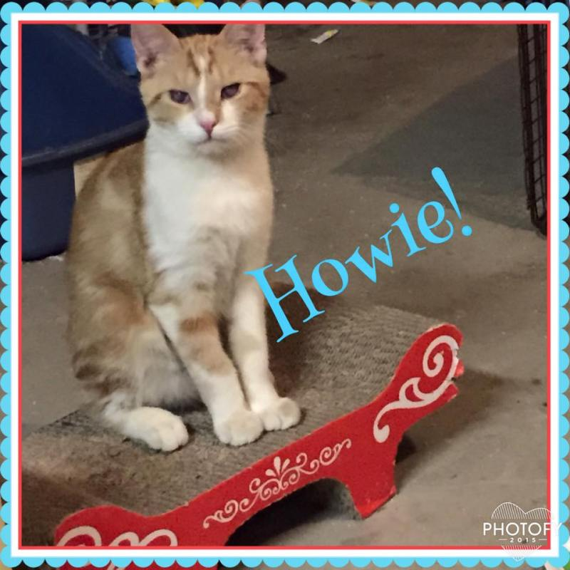 Howie!