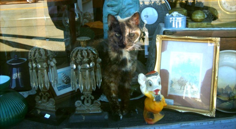 tortoiseshell cat in shop window