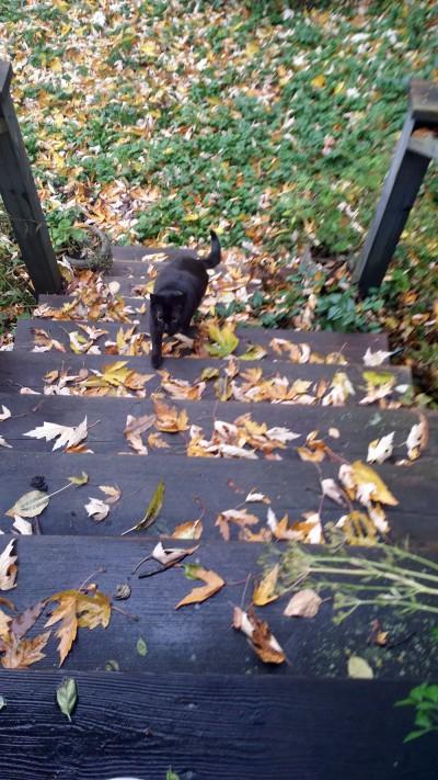 black cat running up steps
