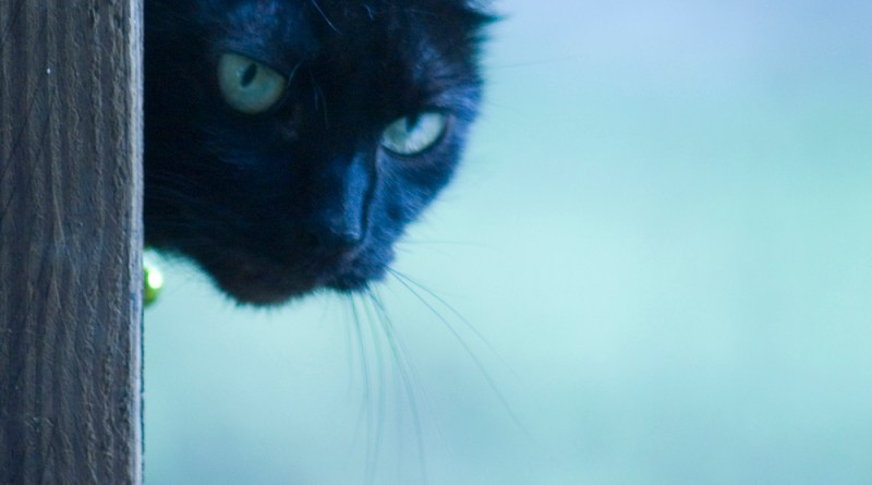 black cat with colors