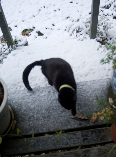 black cat on snowy deck