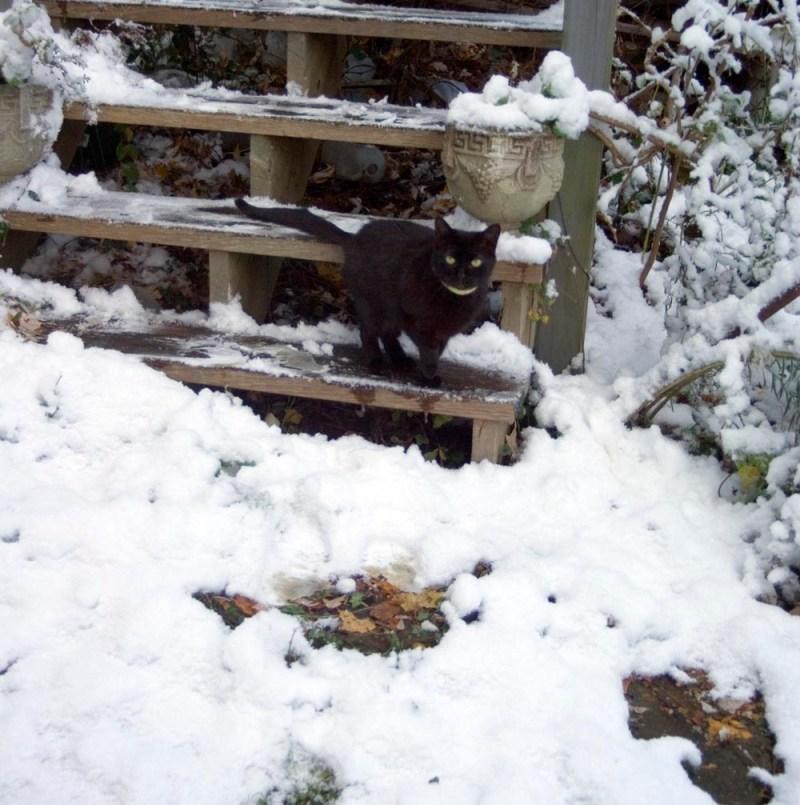 black cat on steps.