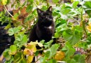 Jelly Bean continues the tradition if sitting in the geraniums.