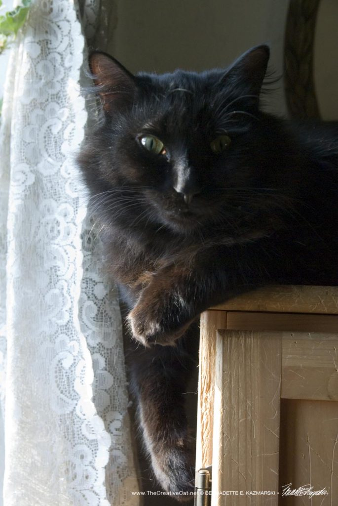 photo of black cat