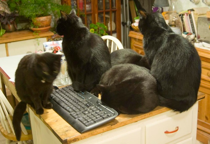 five black cats.