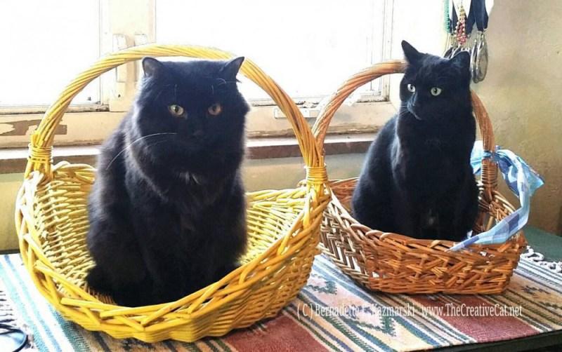 Basil & Bella & the basket.