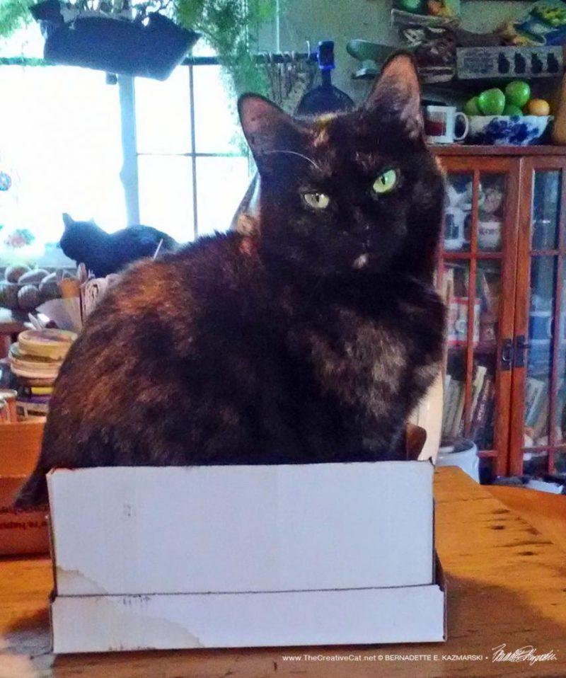 Sienna loves her little box.