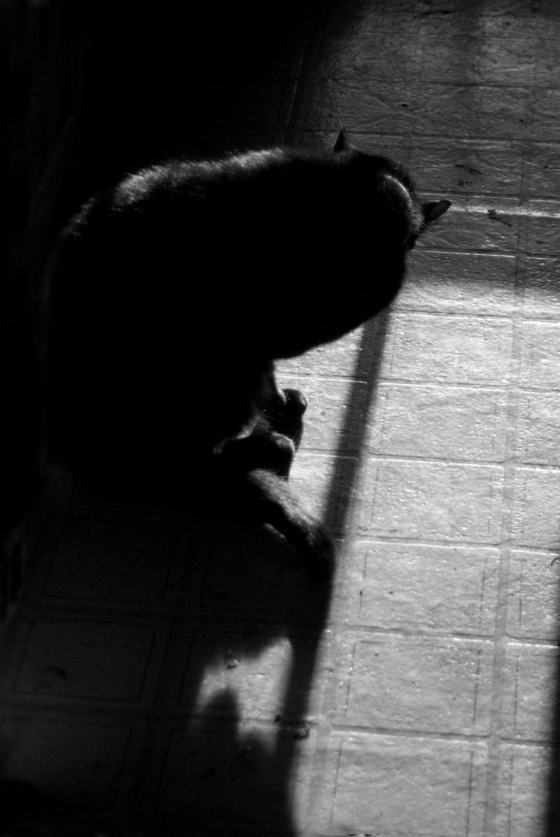 black and white photo of cat bathing
