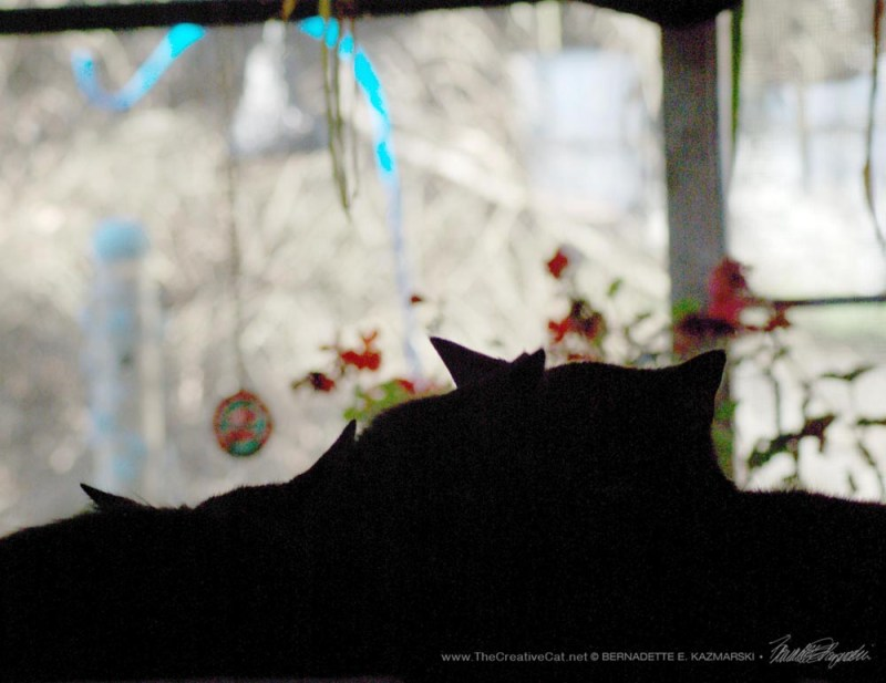 It's much easier to watch the bird feeder from the basket of laundry.