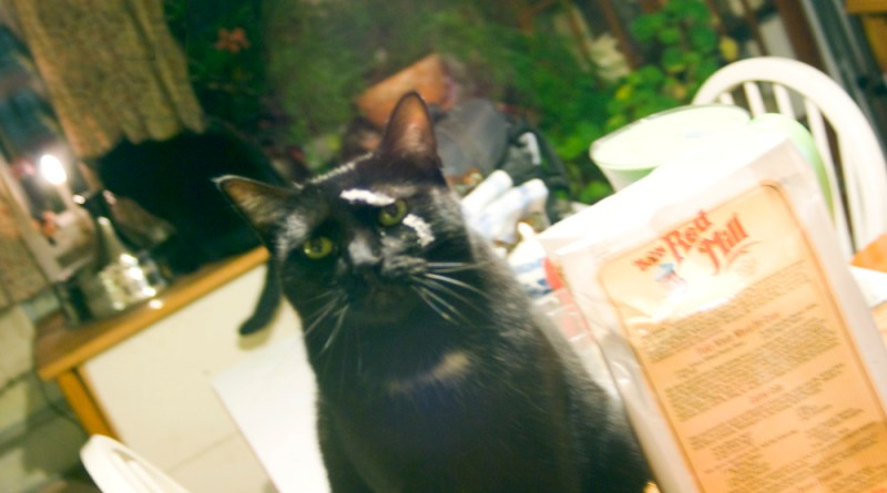 black cat with flour on his face