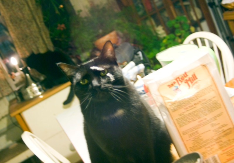 black cat with flour on his face Daily Cat Photo