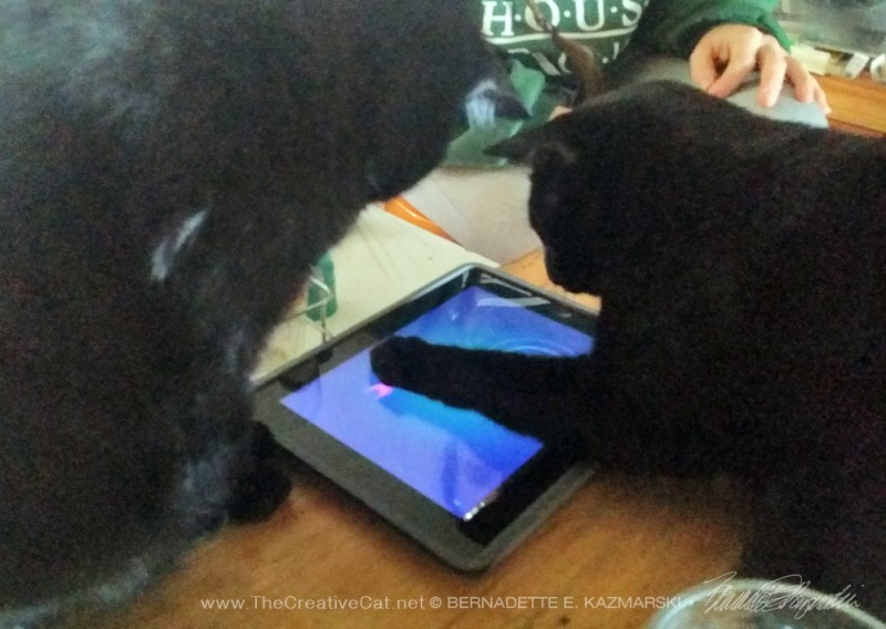 two black cats play computer fishing game