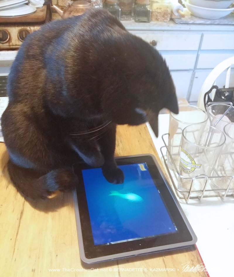 two black cats play computer fishing game Daily Cat Photo