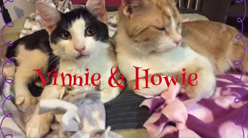 Vinnie and Howie, two rescued kittens, adopt two kittens