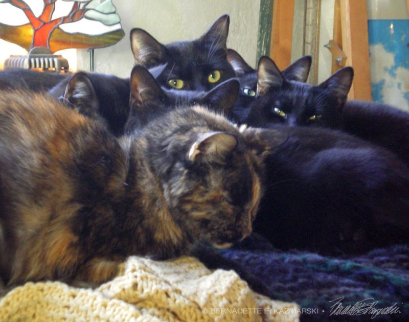 Cookie with her minions.