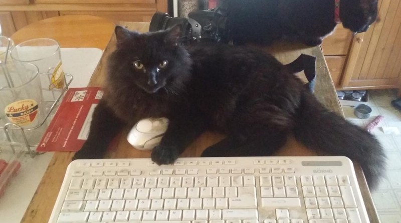 black kitten at keyboard