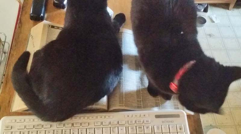 two black cats on a phone book
