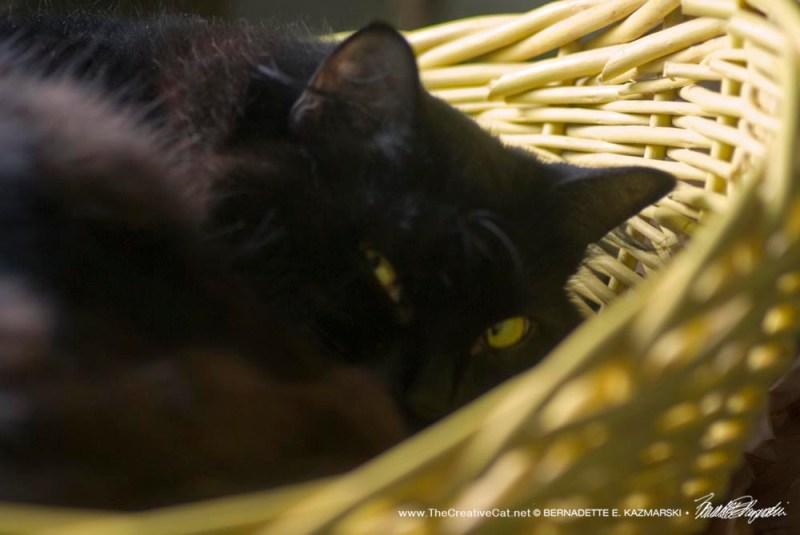 Basil in a basket