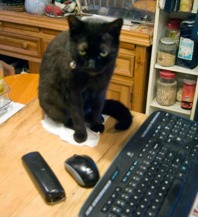black cat sitting on tissue