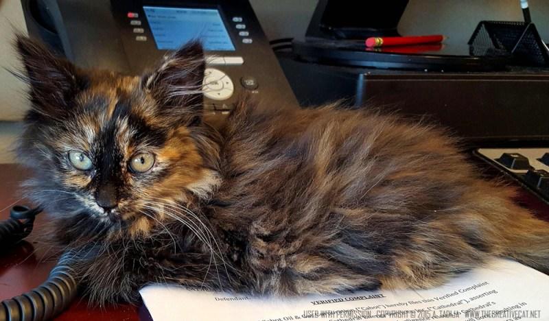 Jasmine screening calls. tortoiseshell kitten