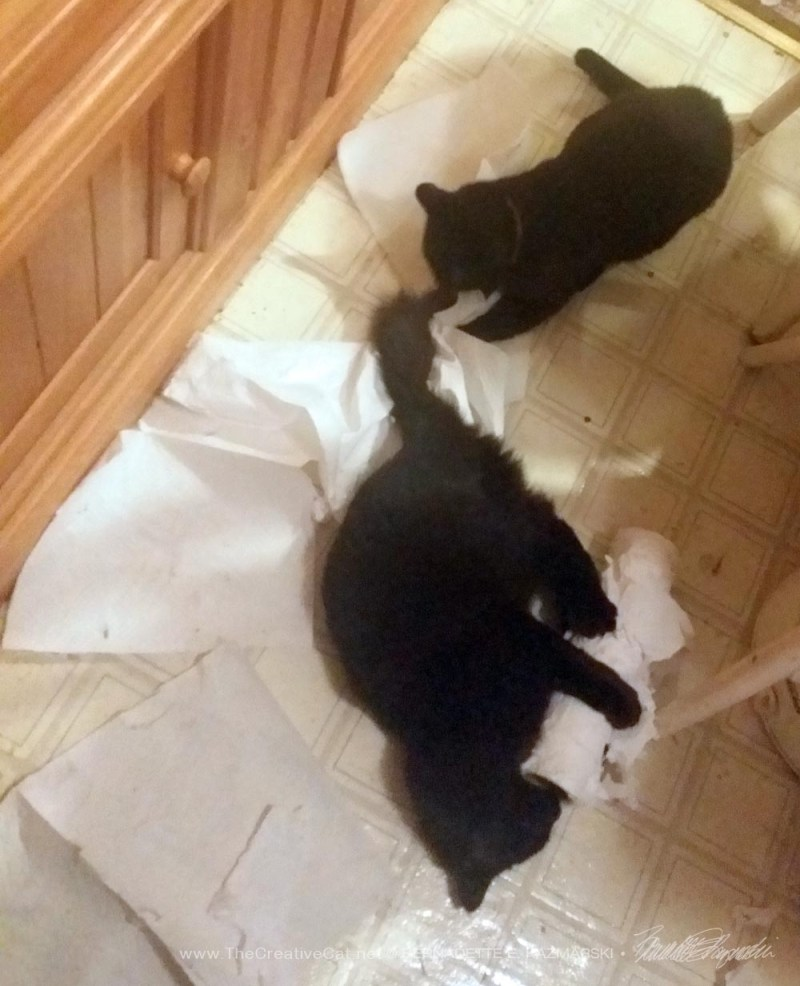two back cats with paper towels