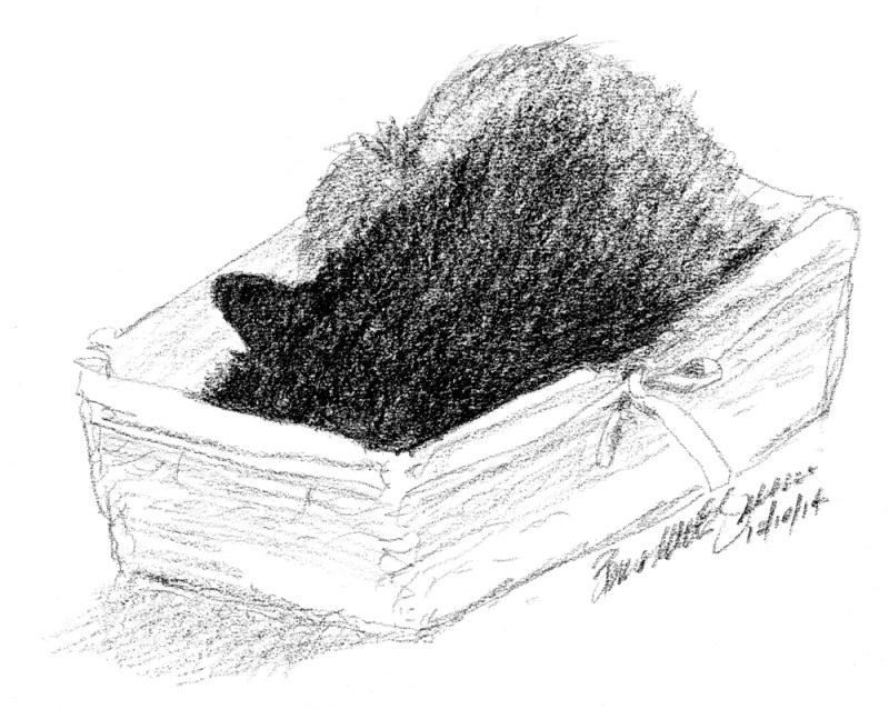 charcoal sketch of cat in basket