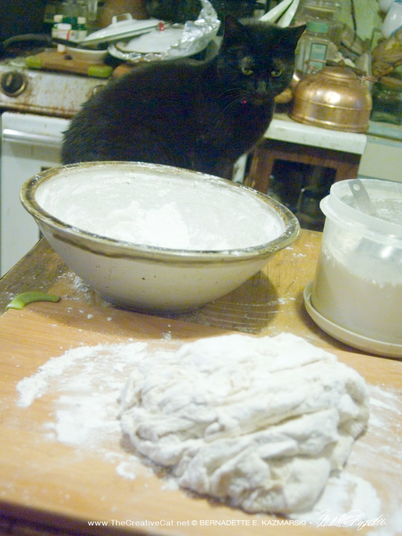 black cat with bread dough