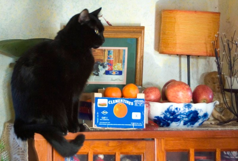black cat with fruit and painting