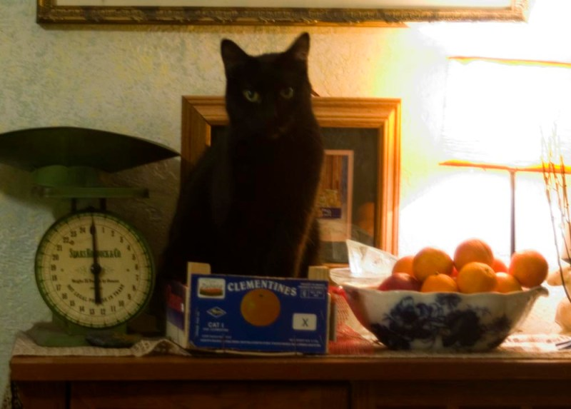 black cat with fruit bowls