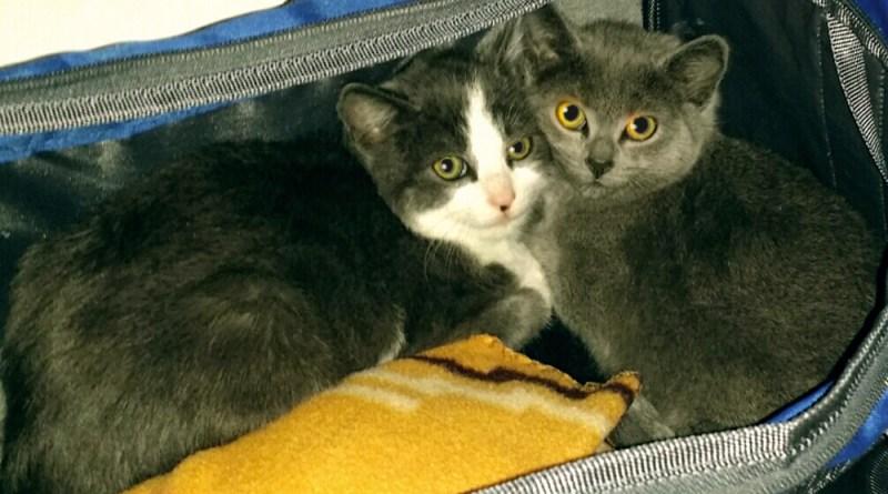 Meet Jack and Diane!