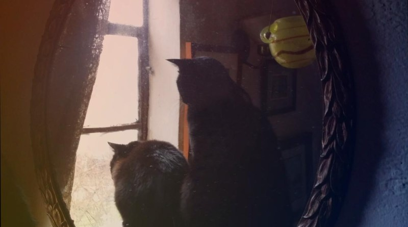 two black cats reflected in mirror