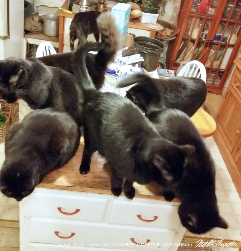 seven black cats