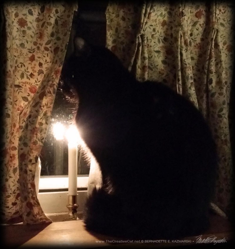 Mewsette waits at the window and wishes the neighbors a merry Christmas eve.