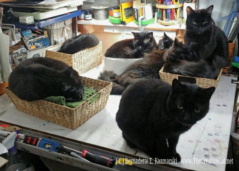 Seven black cats in the studio.
