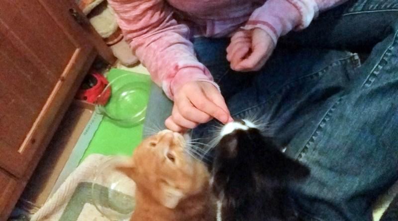 woman feeding treats to two cats