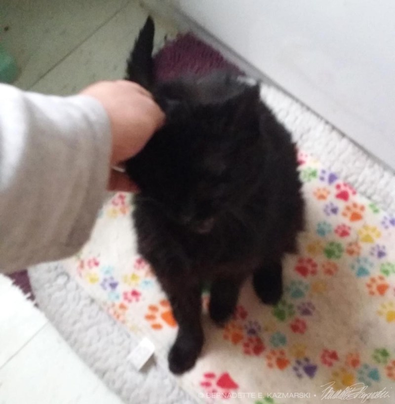 black cat being petted