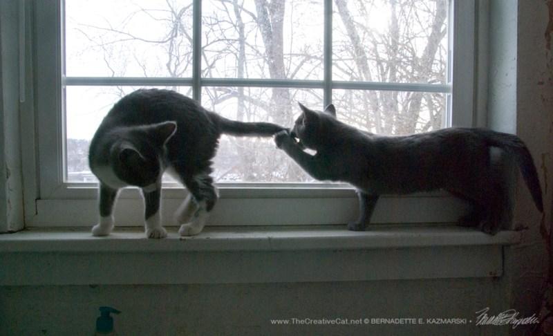 Diane bites Jack's tail...