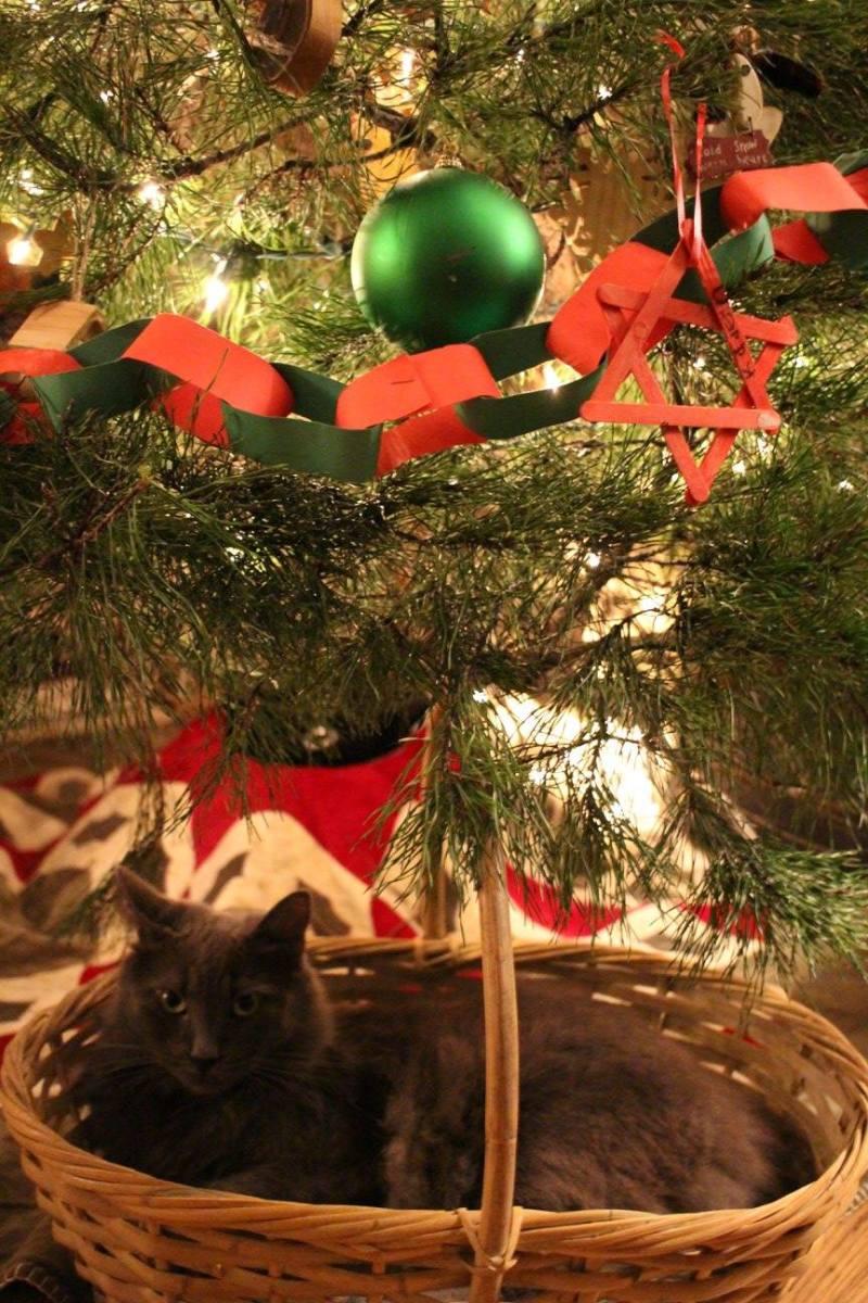 Theo in Simon's basket.