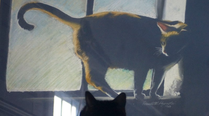 Bella looking at Allegro.