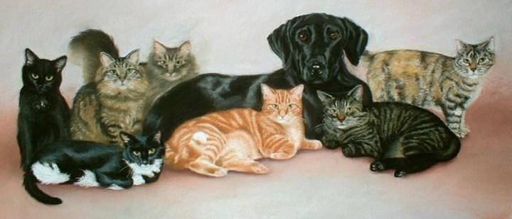 portrait of cats and dog