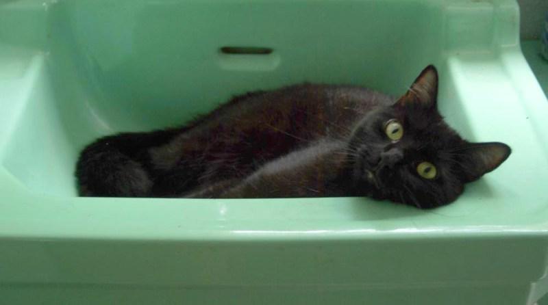 black cat in green sink