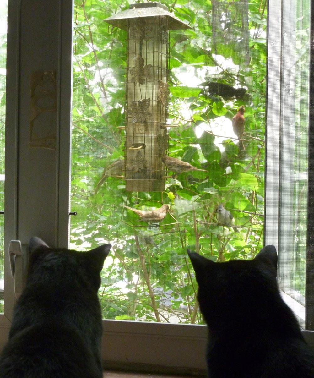 Your Backyard Wildlife Habitat: Sustenance Through the Summer