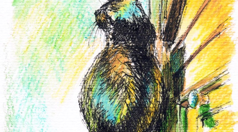 ink and watercolor sketch of cat