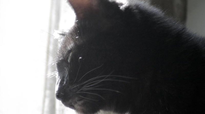 black cat at sunny window