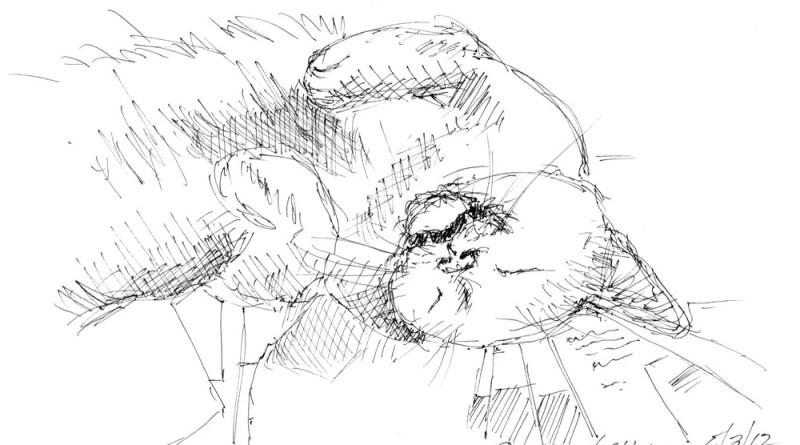 ink sketch of cat sleeping