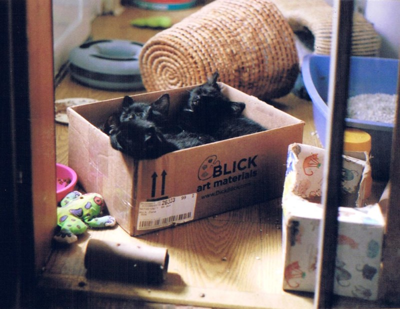 four kittens in a box