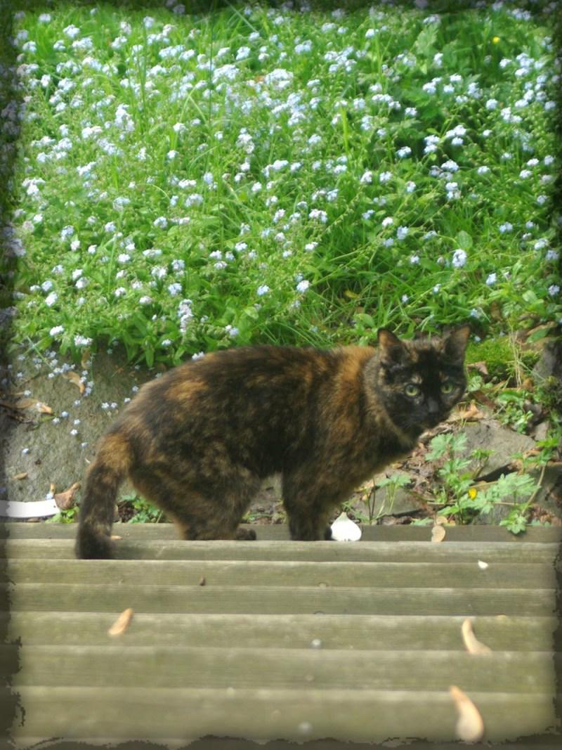 photo of tortoiseshell cat